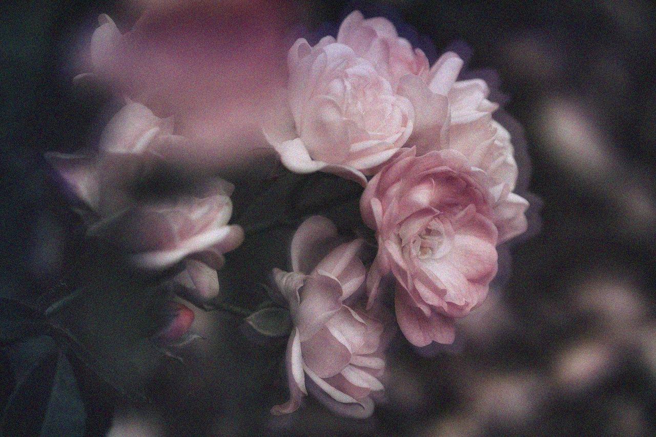 jardin-punk-plantas-rizoma-naturaleza-metaforas